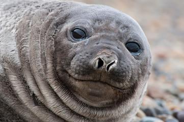 Cute Baby seal ..