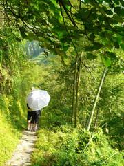 Sentier de randonnée dans une forêt de bambous