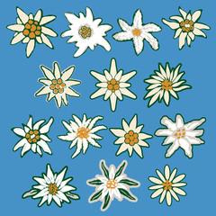 Edelweiss vector set