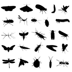 25 different insects silhouettes