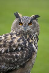 Foto auf Gartenposter Eulen cartoon Eagle Owl