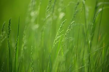 Фон из зеленой молодой травы