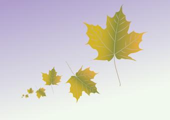 Autumn leafs illustration