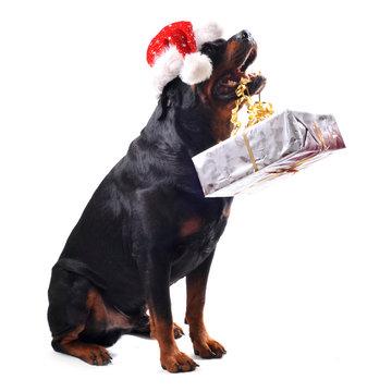 chien et cadeau