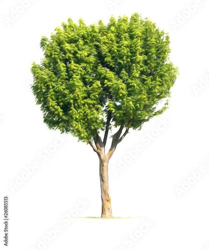 arbre illustration feuille tronc bois vert nature vie d tour photo libre de droits sur la. Black Bedroom Furniture Sets. Home Design Ideas