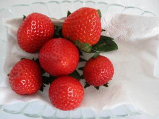 Red Ripe Strawberries.