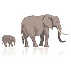fully editable vector illustration elephants