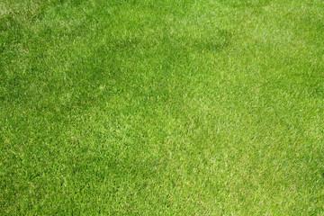 Tuinposter Gras Golf grass