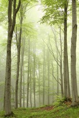 Keuken foto achterwand Bos in mist Enchanted forest with mist moving between the trees