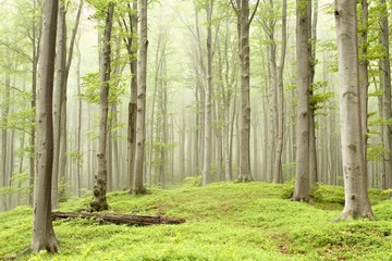 Keuken foto achterwand Bos in mist Misty spring forest on the mountain slope