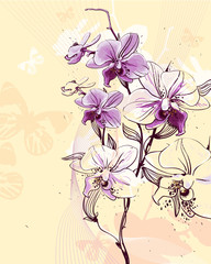 tender twig blossoming orchids on a light background with butter