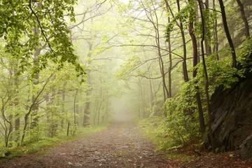 Keuken foto achterwand Bos in mist Path through misty spring forest