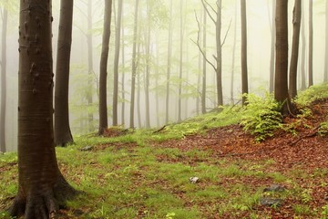 Keuken foto achterwand Bos in mist Spring forest with alder trees surrounded by mist