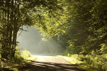 Keuken foto achterwand Bos in mist Rural way through misty forest at sunrise