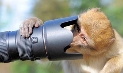 Affe schaut ins Objektiv
