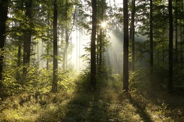 Keuken foto achterwand Bos in mist Misty forest at sunrise