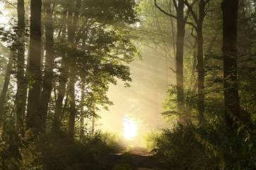 Keuken foto achterwand Bos in mist Dirt road through the woods on a foggy morning