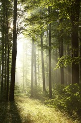 Keuken foto achterwand Bos in mist Bright light falling into the misty forest at dawn