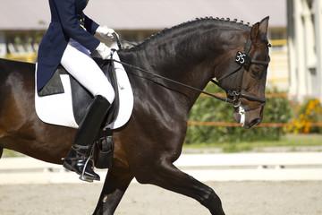 Papiers peints Equitation horse dressage outdoors