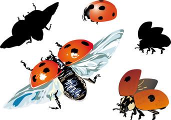 set of isolated ladybugs