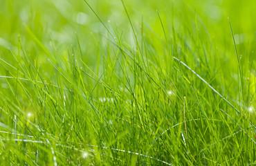 Clear green grass