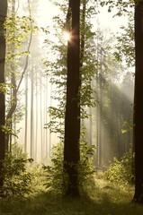 Keuken foto achterwand Bos in mist Sunbeams entering into forest on a misty morning