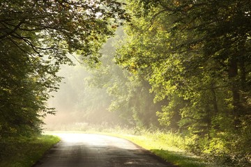 Keuken foto achterwand Bos in mist Rural road through early autumn forest on a foggy morning