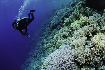 scuba diver swims over reef