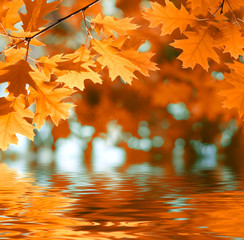 Fototapete - Autumn leaves reflecting in the water.