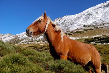 Un cheval en Ariège