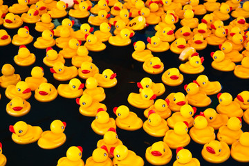 Yellow ducks in a pool
