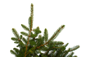 Fir Branches Isolated