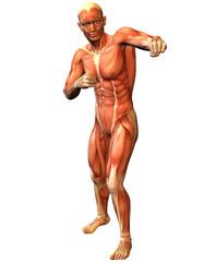 Wall Mural - Muskelaufbau Mann in stehender Kämpfer Pose