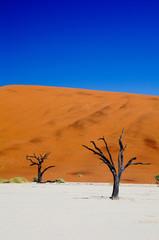 Dead vlei in namib desert in Namibia,dead trees (sossusvlei)