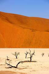 Dead vlei in namib desert in Namibia, dead trees (sossusvlei)