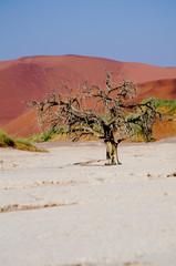 Clay pan in namib desert between dunes (sossusvlei, dead vlei)