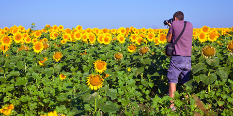 Photographer in a Sunflower Field in Bulgaria