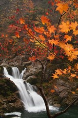 Autumn leaves and Falls