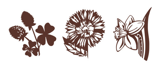illustrations of flowers