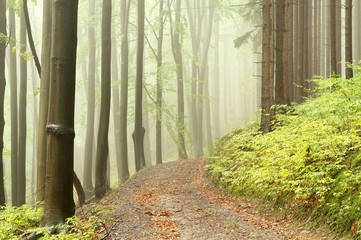 Keuken foto achterwand Bos in mist Forest path among the deciduous and coniferous trees