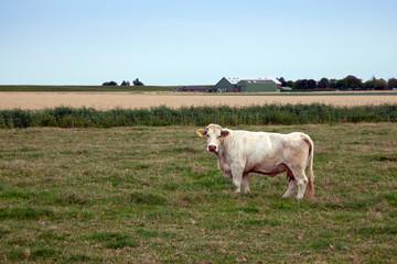 Fotobehang Koe Kuh auf der Weide 609