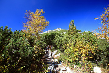 autumn neture general view