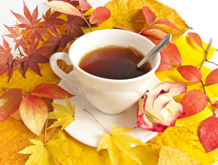 cup of tea and fall still life from colored leaves