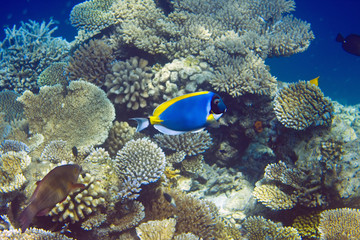Indian ocean. .Fishes in corals. Maldives..