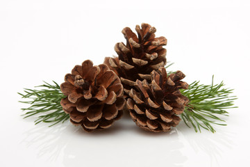 Wall Mural - Pine Cones and Needles