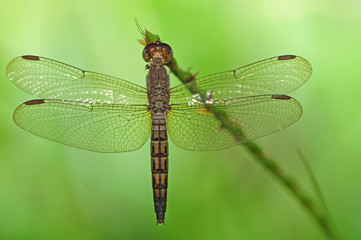 A Dragonfly In Natural Environment