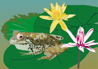 frog on leaf near flowers