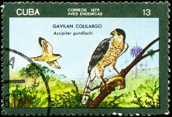 CUBA - CIRCA 1976 Accipiter