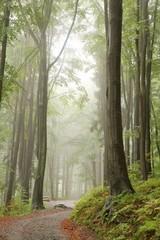 Keuken foto achterwand Bos in mist Path in misty autumn forest