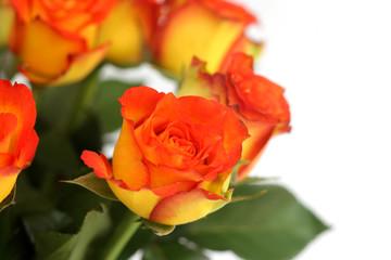 Bunch of Orange Roses